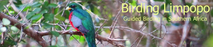 Birding Limpopo, guided birding in and around Hoedspruit, Kruger Magoebaskloof and beyond