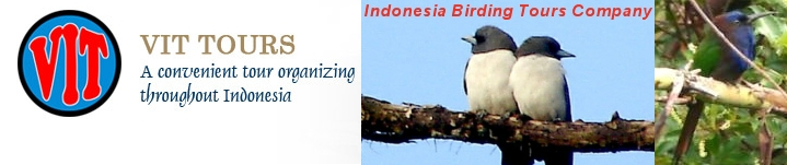 Go birding in Indonesia with Vacation Indonesia Tours