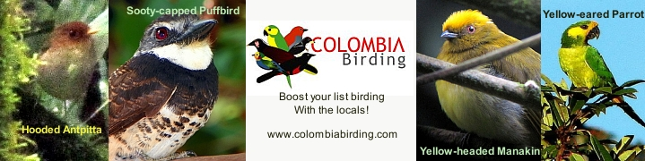 Colombia Birding, birdwatching guided tours Colombia